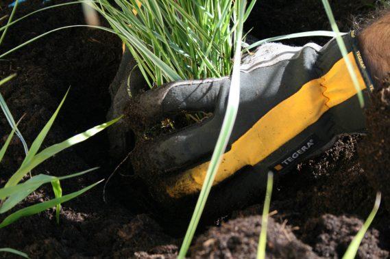 Trädgårdsskötsel och trädvård