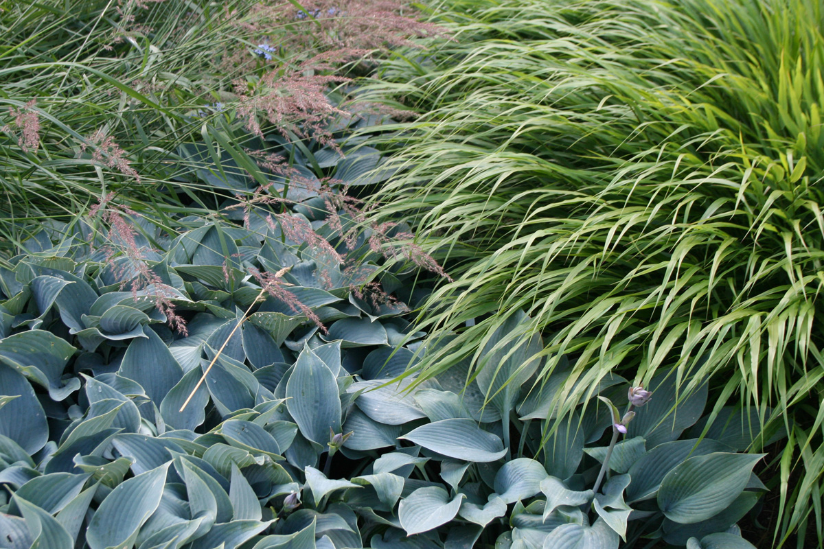greenery 1200×800