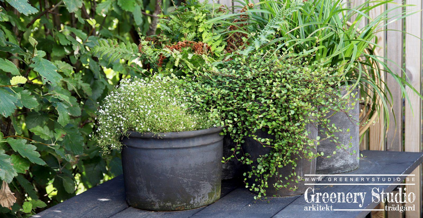 garden corner 1